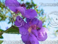 Purple Flower [visceral].tif